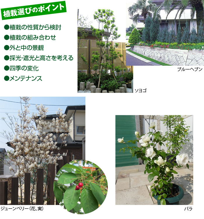 植栽選びのポイント ・植栽の性質から検討・植栽の組み合わせ・外と中の景観・採光・遮光と高さを考える・四季の変化・メンテナンス